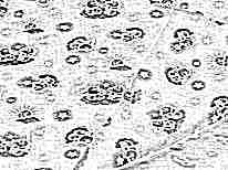 Ситец для пошива пеленки-кокона для новорожденных своими руками