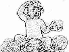 Когда можно давать ребенку белокочанную капусту?