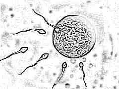 Все о зачатии ребенка: что происходит в организме женщины и как оплодотворяется яйцеклетка?