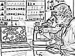 Как устроены сперматозоид и яйцеклетка, чем они отличаются?