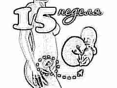 Развитие плода на 15 неделе беременности