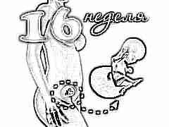 Развитие плода на 16 неделе беременности
