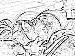 Ишемия мозга 2 степени у новорожденных