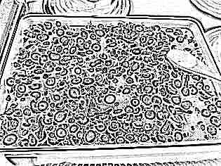 Заготовка цикория в домашних условиях