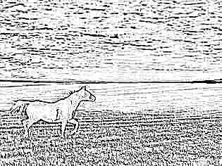 Иппотерапия: лечение лошадьми детей-инвалидов с ДЦП и аутизмом, отзывы