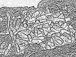 Вульвит при атопическом дерматите