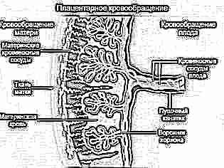 Переднее предлежание плаценты 35