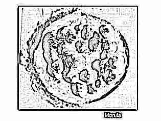 Что происходит в матке после переноса эмбриона