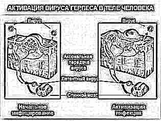 Анализ крови после розеолы