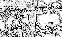 «Повелитель птиц»: жители Брянска восхитились ребенком, который приручил городских голубей