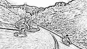 Чем отличаются скейтборды, лонгборды и скейты-круизеры?