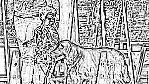 Что такое канистерапия и как она помогает лечить детей?