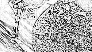 Чем отличается масляная краска от акриловой?