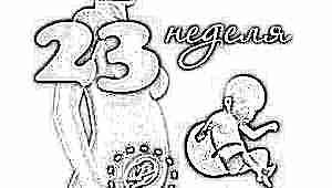 Развитие плода на 23 неделе беременности