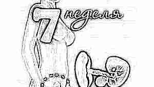 Развитие плода на 7 неделе беременности