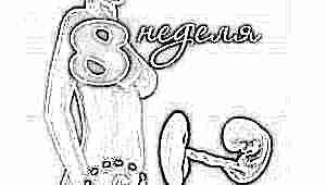 Развитие плода на 8 неделе беременности