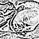 Гемолитическая желтуха у новорожденных