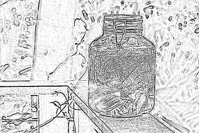 укропная вода как приготовить из семян