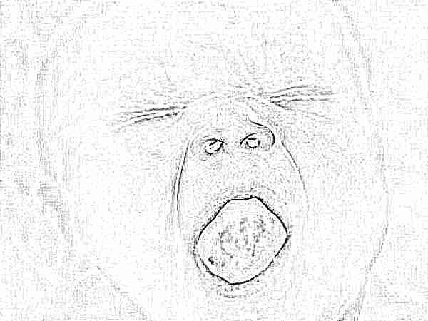Кандидозный стоматит у детей или молочница