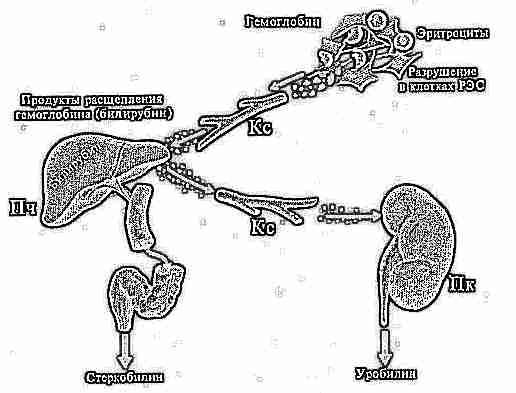 анализ крови повышенный уровень холестерина