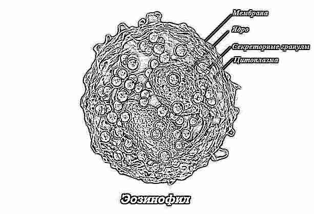 Эозинофилы 4 у ребенка