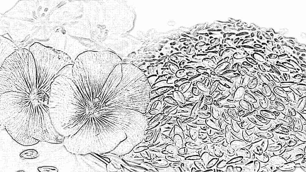 Чем полезны семена льна беременным