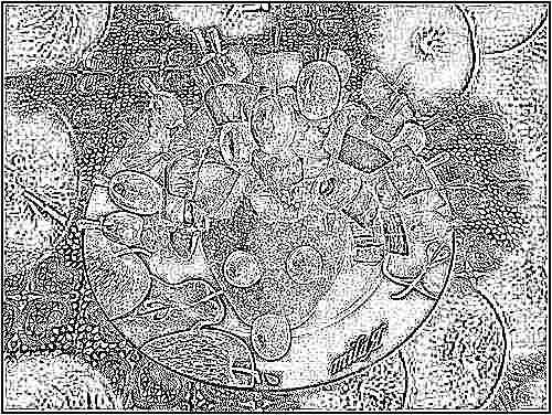 Салат детский фруктовый