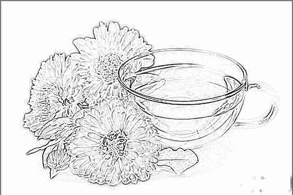 Чай с календулы противопоказания