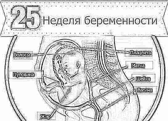 Признаки беременности шестой неделе