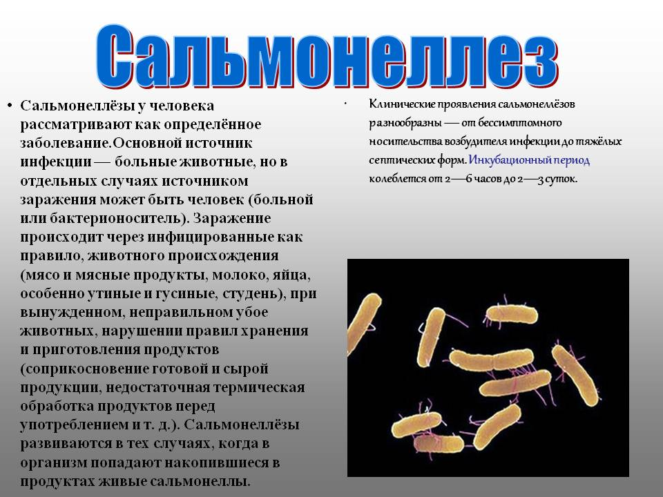 salmonella bacteria and regular diet Tag words: bacteria, enteric bacteria, microbiology, microbe, salmonella, salmonella enterica, salmonella typhi, s typhimurium, s enterica, typhoid fever, enteric fever, salmonellosis, food poisoning, gastroenteritis salmonella and salmonellosis (page 3) (this chapter has 5 pages.