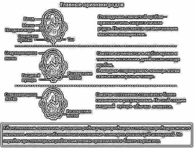 Предвестники родов при 3-й беременности людмила • все записи пользователя в сообществе.