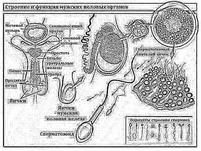 Улучшение функции спермы например