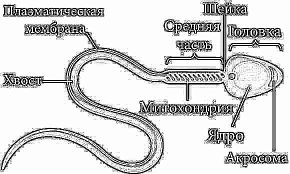 Какие препараты нужны при лечении потологии головки сперматозоида
