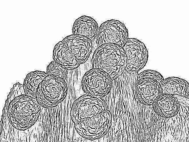 Сперма макрофаги