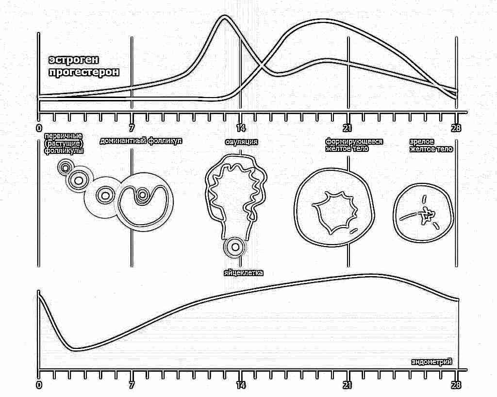 Дюфастон с 16 по 25 день цикла при эндометриозе отзывы