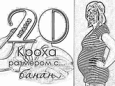 Двадцатая неделя беременности это сколько месяцев