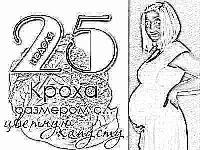 Ощущения мамы рост плода и развитие которое происходит на 24-25 неделе беременности