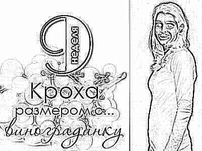Таблица развития эмбриона по неделям и дням беременности от зачатия