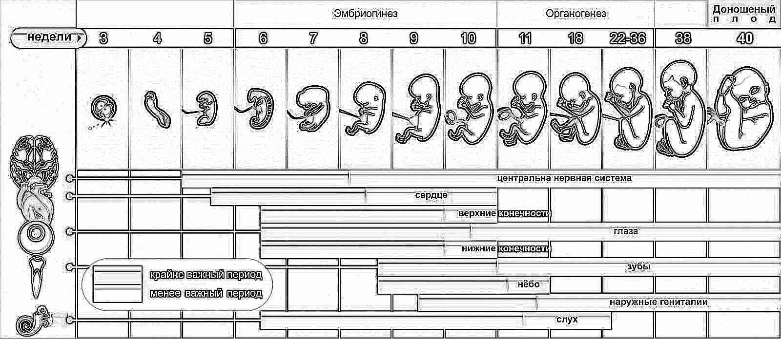 От этого срока врачи начинают определять акушерский срок беременности. Он  измеряется в неделях. 3ae06efb474