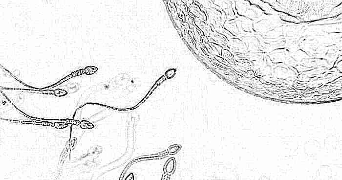 Как можно повысить подвижность сперматозоидов