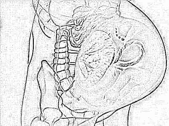 Что значит полное предлежание плаценты