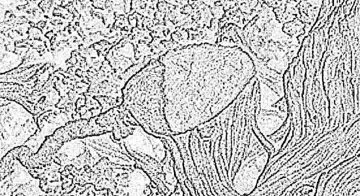 Сперматозоид человека сколько может жить во внешней среде