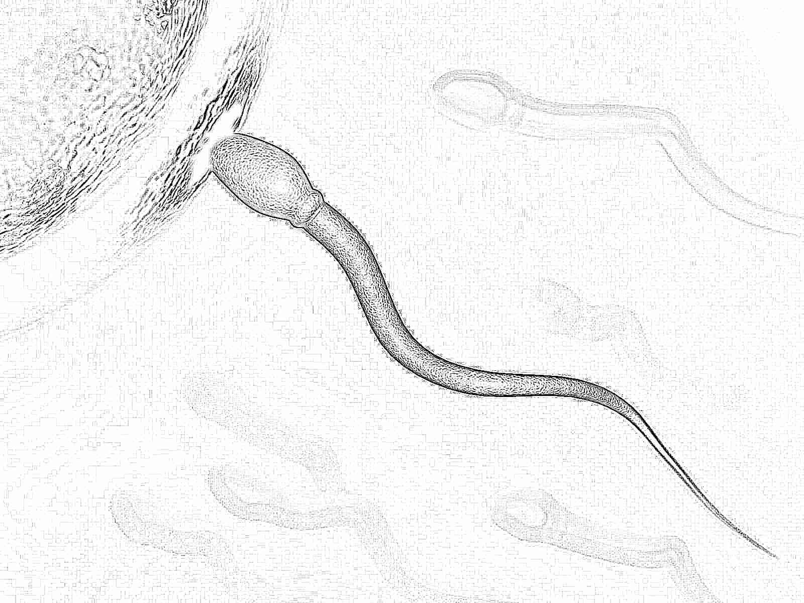 Как долго могут существовать сперматозоиды