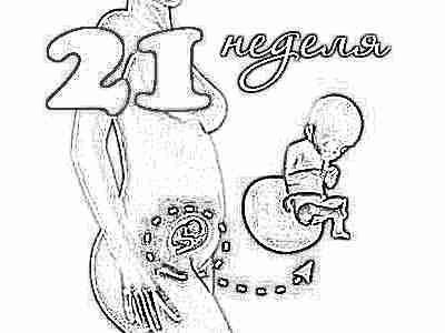 Что происходит с малышом на 21 неделе беременности (16 фото): развитие плода, как выглядит ребенок в 20-21 неделю, вес и размер, ощущения || Беременность 21 неделя размеры плода и развитие малыша