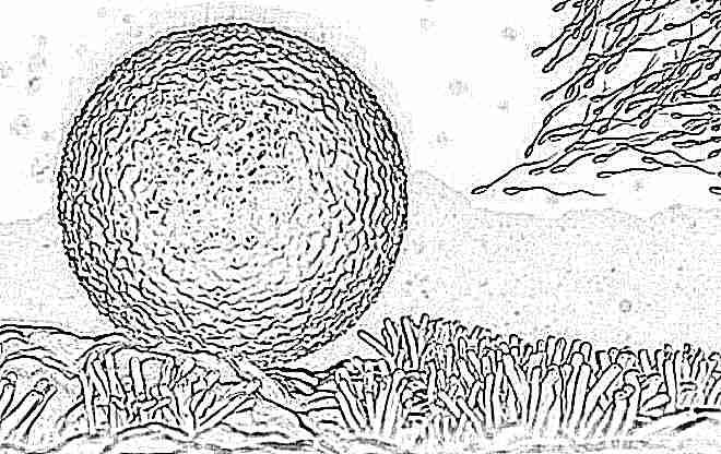 На какой день месячных яйцеклетка выходит