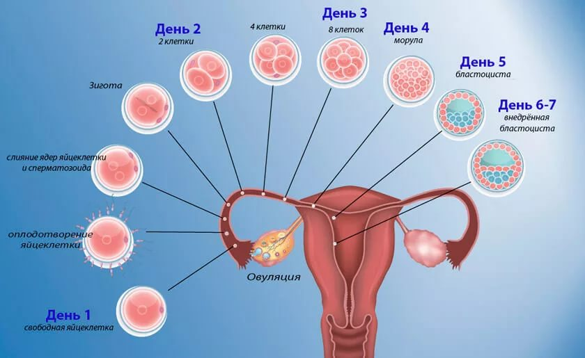 8 дней после овуляции симптомы беременности