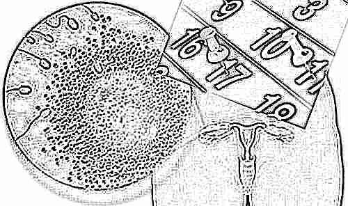Овуляция и зачатие: когда начинается, как правильно рассчитать для наступления беременности?