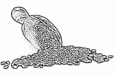 Приготовление укропной водички из семян укропа в домашних условиях
