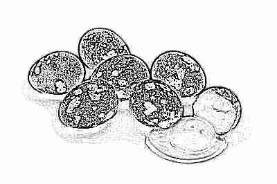 Перепелиные яйца для омлета