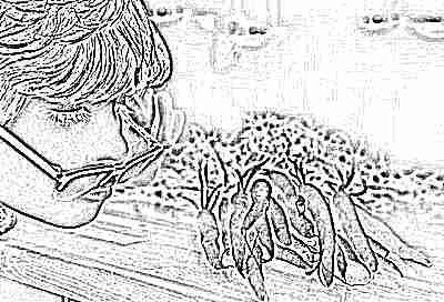 Мальчик плохо вид - смотри на морковь